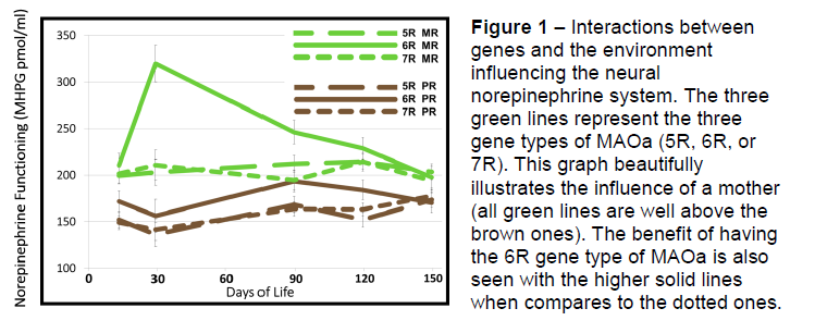 MAOa Genotype X Environment Interaction and Influence on